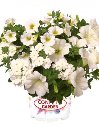 Конфетти Garden Tone in Tone White Win
