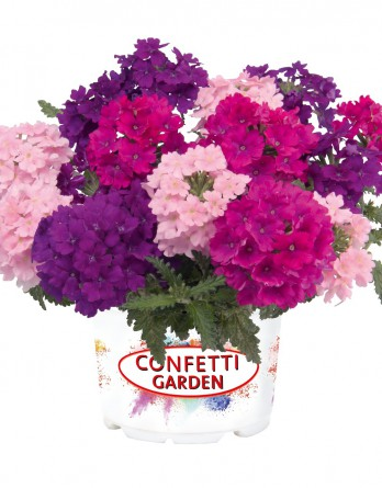 Конфетти Garden Verbena Victoria