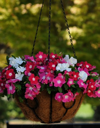 Vinca-Mediterranean-XP-Mix